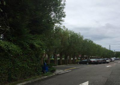 ecimage-d'arbres-3